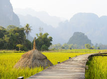 Rice fields farm Stock Photos