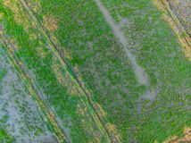 The rice fields are flooded with water. Flooded rice paddies. Agronomic methods of growing rice in the fields. Flooding. The fields with water in which rice royalty free stock photo