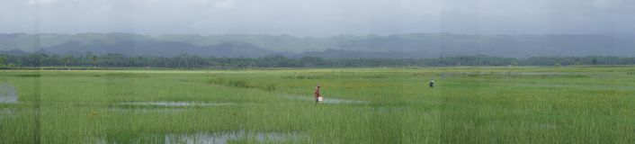 Panoramic view on the flat part of the island of Java Indonesia. Rice fields during floods in the heart of the island of Java Royalty Free Stock Images