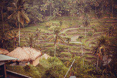 Rice fields. Green jungle and hindu artefacts in Bali; Indonesia stock photography