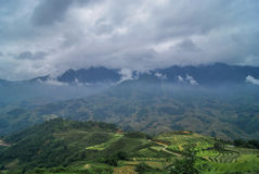 Rice fields and green mountains. Haze over the mountains of Sapa Royalty Free Stock Images