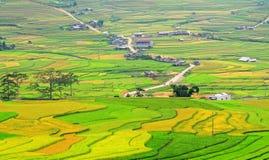 Rice fields in Hagiang, Vietnam Stock Photo