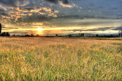 Rice fields before harvest time Royalty Free Stock Photos