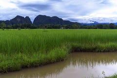 Rice Fields, Hills. Stock Photo
