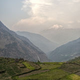 Rice fields in Himalaya. M mountains near Gatlang Village Royalty Free Stock Images