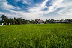 Rice Fields , Hoian City  - Vietnam Stock Photos