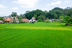 Rice fields and houses on Bali Indonesia Royalty Free Stock Image