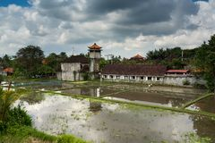 Rice fields and houses. Ubud, Bali, Indonesia. stock photo