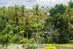 Rice fields, houses and vegetation in the town of Ubud, Bali, Indonesia stock images