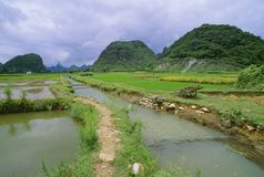 Rice Fields And Irrigation Ditch In Yangshuo Stock Images