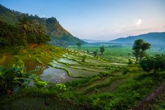 Rice fields of the island of Bali stock photos