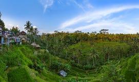 Rice fields Jatiluwih - Bali island Indonesia Royalty Free Stock Photos