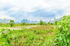 Rice fields and karst hill by Yangshuo in China Royalty Free Stock Photos