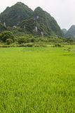 Rice fields and karst mountains landscape china. Rice fields on foreground and karst mountains landscape china Stock Photos