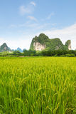 Rice fields and karst mountains in southern china Royalty Free Stock Photography