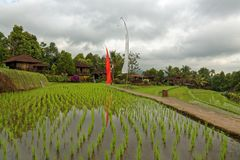 Rice fields in Munduk in Bali. Rice fields landscape in Munduk, a town funded by the Dutch in Bali Stock Photography