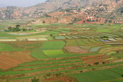 Rice fields landscape. The terraced paddy fields of the central highlands of Madagascar are mainly occupied by rice fields, farmed by traditional agriculture Royalty Free Stock Photography