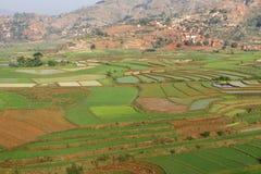 Rice fields landscape Royalty Free Stock Photography