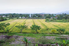 Rice fields. Landscape rice fields in Thailand Stock Images
