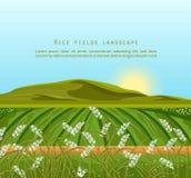 Rice fields landscape Vector. Sunshine background. Illustration Royalty Free Stock Photo
