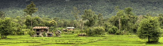Rice Fields - Laos Royalty Free Stock Image