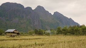 Rice fields in Laos. Crop is harvested stock video
