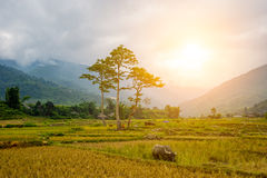 Rice fields at Lim Mong, Tu Le, Mu Cang Chai royalty free stock photos