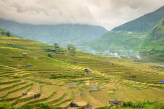 Rice fields at Lim Mong, Tu Le, Mu Cang Chai Royalty Free Stock Photo