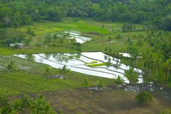 The rice fields in the lowlands of the Philippines Stock Photo