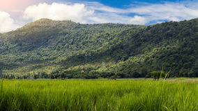 Rice fields with lush green mountains. Royalty Free Stock Photo