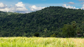 Rice fields with lush green mountains. Royalty Free Stock Images