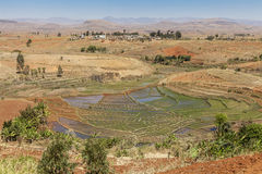 Rice fields in Madagascar, Africa. Rice fields in Madagascar with a small village in the background Royalty Free Stock Image