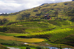 Rice fields Malagasy landscape. Royalty Free Stock Image