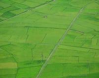 Rice fields in Moc Chau, Vietnam Stock Image