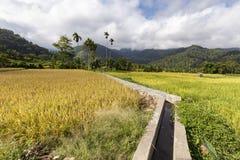 Rice fields in moni royalty free stock photos