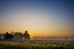 Rice fields in the morning Stock Photos