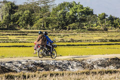 Rice fields and motor bike Stock Images