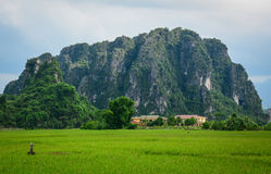 Rice fields with mountain background in Hanoi, Vietnam Stock Image