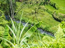 Rice fields with mountain spring in Bali. Indonesia on a hot afternoon stock photography
