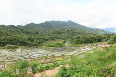 Rice fields in mountains on Flores royalty free stock photography