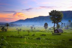 Rice. Fields and mountains on the horizon at sunrise. Bali. Indonesia Royalty Free Stock Photography