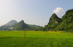 Rice fields with mountains in Lai chau province, Vietnam Royalty Free Stock Images
