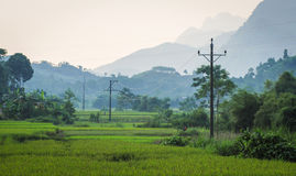 Rice fields with mountains in Lai chau province, Vietnam Royalty Free Stock Image
