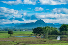 Rice Fields and Mountains Stock Image