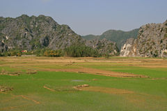 Rice fields and mountains - North Vietnam Royalty Free Stock Photography