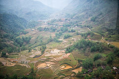 Rice fields in mountains in Sa Pa, north Vietnam. Royalty Free Stock Photos