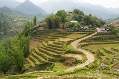Rice fields in mountains in Sa Pa, north Vietnam. Royalty Free Stock Images