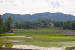 Rice fields, mountains, sky soft and blur. Background Royalty Free Stock Photography