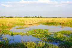 Rice fields in Myanmar Stock Images