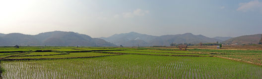 Rice fields in myanmar. Terraced rice fields in the mountains of shan state, next to kyaukme, Myanmar Stock Photo